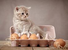 Kitten And Eggs