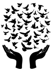 Fototapetahands releasing peace pigeon