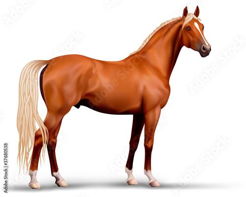 Photo  Vector beautiful realistic flaxen chestnut horse