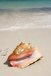 Exotic seashell on the beach