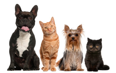 FototapetaGroup of cats and dogs sitting in front of white background