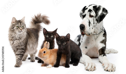 Naklejki zwierzęta  group-of-cats-and-dogs-and-rabbit