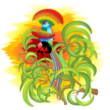 Uccello Del Paradiso Esotico F...