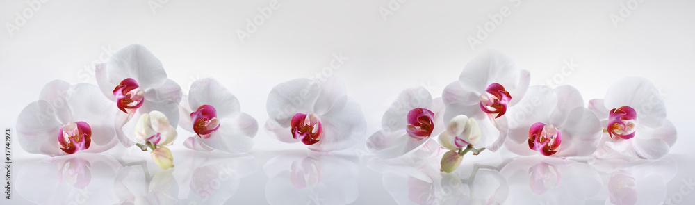 Fototapeta Orchideen 2