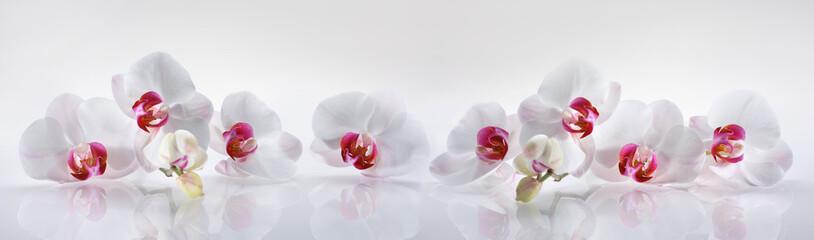 Fototapeta na wymiar Orchideen 2