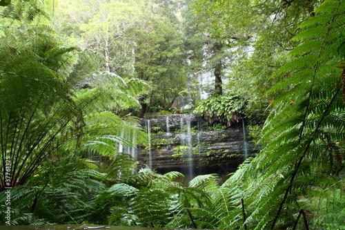 Naklejki dżungla  paprocie-w-dzungli