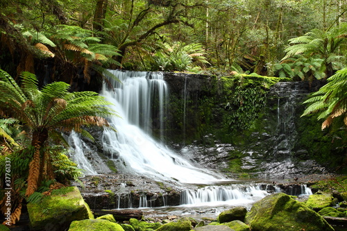 Obrazy dżungla   wspanialy-russel-spada-w-tasmania-australia