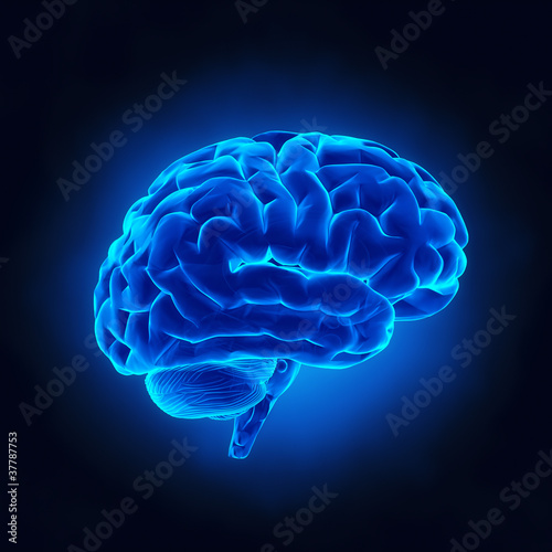 Human brain in x-ray view Poster
