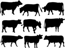 Cow Silhouette Collection - Ve...