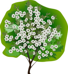 Fototapetaisolated white flowers tree