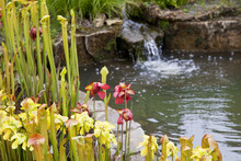 Garden Pond Scene With Flowers And Mini Waterfall