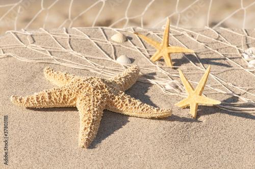 Foto-Leinwand - Stillleben mit Seesternen, Strandmotiv, Urlaubszeit