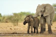 Elephant #14