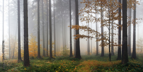 Fotobehang Bos in mist Misty autumn forest after rain