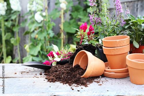 Fotografie, Obraz  Gardening