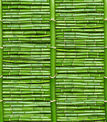 Fototapeta bamboo - wallpaper