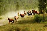 Fototapeta Horses - Running Horses