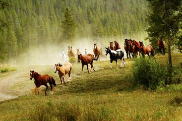 Panel Szklany Eko Running Horses