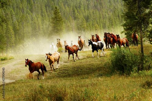 Photo  Running Horses