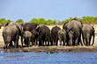 a group of elephant near a waterhole at etosha national park