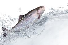 Fische 131