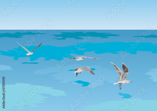 Poster Vogels, bijen Seagulls on the sea