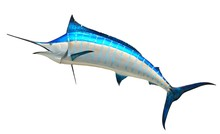 Blue Marlin Mounted