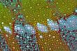 canvas print picture - Die Haut eines Chamäleons