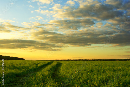 Cadres-photo bureau Miel grass field and dramatic sky at sunset