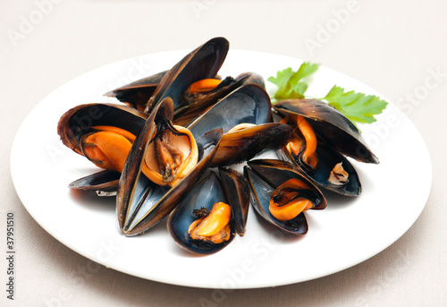 Poster Coquillage Mussels