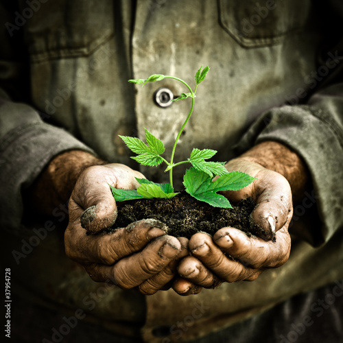 Fotografía  Man hands holding a green young plant