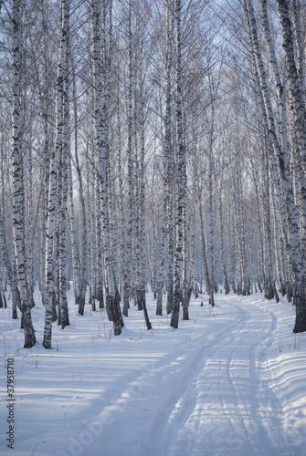 Tuinposter Berkbosje winter road in the forest