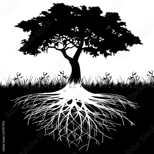 Foto  Tree roots silhouette