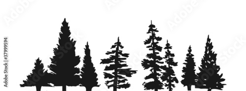 Trees Fotobehang