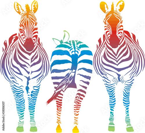 Naklejki zebra   rainbow-zebra