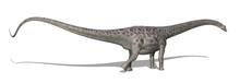 Diplodocus Dinosaur