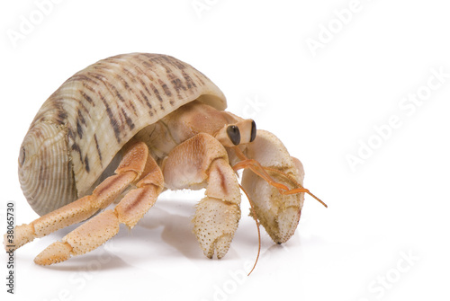 Hermit Crab Canvas-taulu