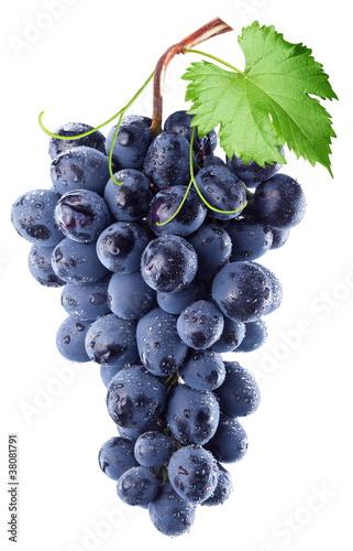 Fototapeta Grapes obraz