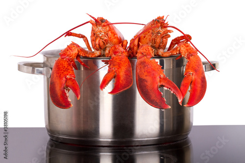 Lobsters looking out of pot