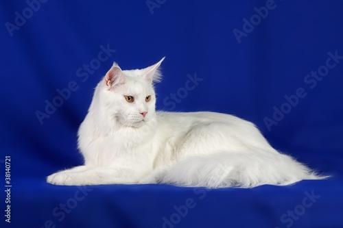 Naklejki koty   glaskac-kota