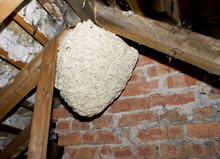 Large Wasp Nest Hanging In Dark Loft Space