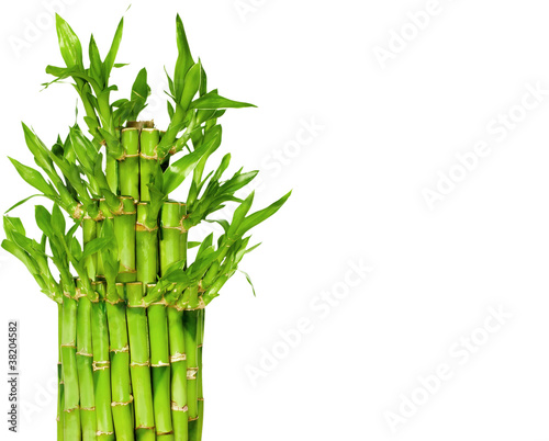 lucky-bamboo-free