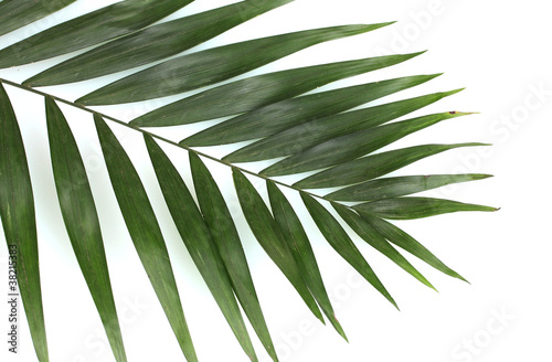 Poster Vegetal Beautiful palm leaf isolated on white