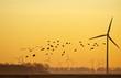 Leinwandbild Motiv Wind energy and flying birds at sunrise
