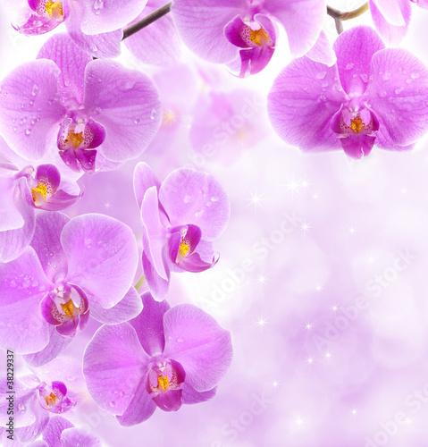 storczykowe-kwiaty-z-kropli-wody
