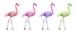 canvas print picture - Compilation flamants roses
