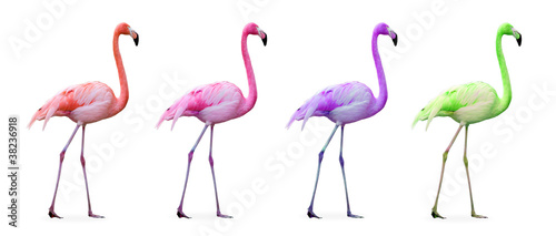 Poster de jardin Flamingo Compilation flamants roses