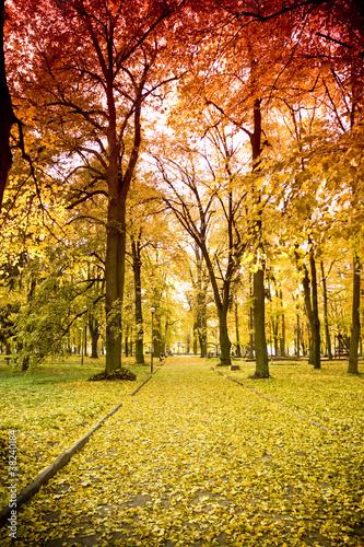 Dekoracja na wymiar park-jesienia