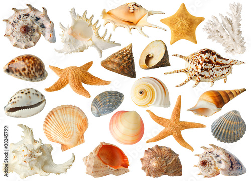 Wall Murals Under water Isolated sea objects. Large collection of sea shells and stars isolated on white background
