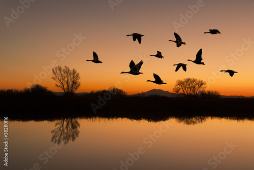 Papiers peints Oiseau Canadian Geese at Sunset